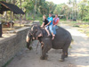 Emily, Amanda, and Greggii on Elephant in Sri Lanka